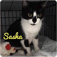 Adopt A Pet :: Sasha - THORNHILL, ON