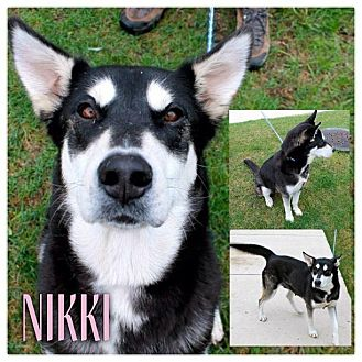Husky Mix Dog for adoption in Garden City, Michigan - Nikki