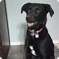 Adopt A Pet :: Mogli - Saskatoon, SK