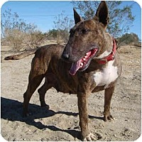 Adopt A Pet :: Yuma - Los Angeles, CA