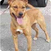 Adopt A Pet :: Cora - Las Vegas, NV