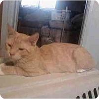 Adopt A Pet :: Simba - Washington Terrace, UT