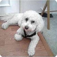 Adopt A Pet :: Casanova - La Costa, CA