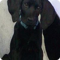 Adopt A Pet :: Pluto - River Falls, WI