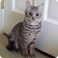 Adopt A Pet :: Charli - Irvine, CA
