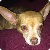 Adopt A Pet :: Paco (Nibbler) - geneva, FL