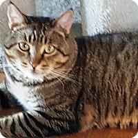 Adopt A Pet :: Otis - Pasadena, CA