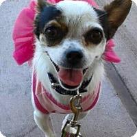 Adopt A Pet :: Chikis - Las Vegas, NV