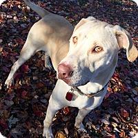 Adopt A Pet :: Oscar - Hanna City, IL
