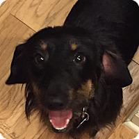 Adopt A Pet :: Pierce - Decatur, GA