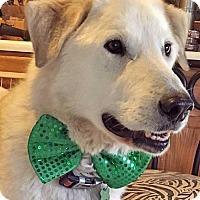 Adopt A Pet :: Charlie in OK - Beacon, NY