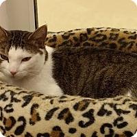 Adopt A Pet :: Gabrielle - Westbury, NY