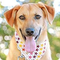 Adopt A Pet :: Myria - San Francisco, CA