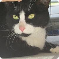 Adopt A Pet :: BOOTS - Aiken, SC