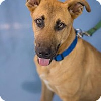 Adopt A Pet :: Cody - Bradenton, FL