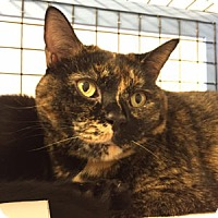 Domestic Shorthair Cat for adoption in Novato, California - Olive and Sammy