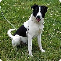 Adopt A Pet :: LOKI - Owenboro, KY