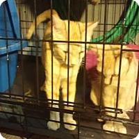 Adopt A Pet :: Youji - New York, NY