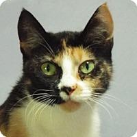 Adopt A Pet :: Naomi - Grants Pass, OR