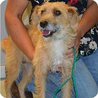 Terrier (Unknown Type, Small) Mix Dog for adoption in Midvale, Utah - cassie