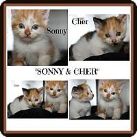 Adopt A Pet :: Sonny & Cher - Marietta, OH