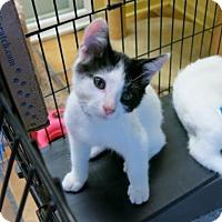 Adopt A Pet :: Muddle - Northbrook, IL