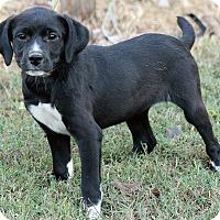Adopt A Pet :: Lucy - Plainfield, CT