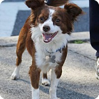 Adopt A Pet :: Ringo - Kennesaw, GA