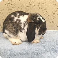 Adopt A Pet :: Stanley - Bonita, CA