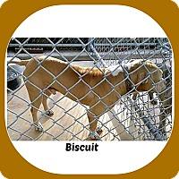 Adopt A Pet :: BISCUIT - Malvern, AR