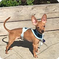 Adopt A Pet :: Beacon - Houston, TX