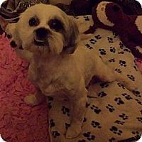Adopt A Pet :: Foghorn Leghorn - Phoenix, AZ