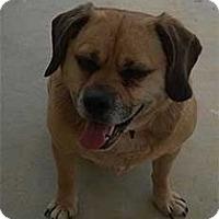 Adopt A Pet :: Mattie - Seymour, CT