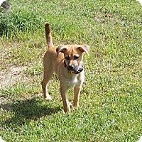 Adopt A Pet :: Rosie - New Boston, NH