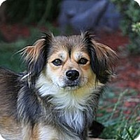 Adopt A Pet :: Lady - San Diego, CA