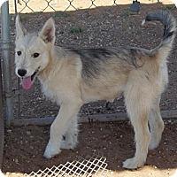 Adopt A Pet :: Sky - Post, TX