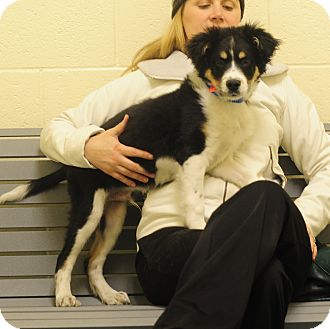 Gus | Adopted Puppy | Eden Prairie, MN | Bernese Mountain ...