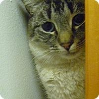Adopt A Pet :: Mona LIsa - Hamburg, NY