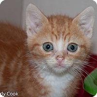 Adopt A Pet :: Petr Mrazek - Ann Arbor, MI