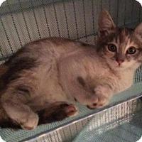Adopt A Pet :: Harlee - Buena Park, CA