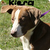 Adopt A Pet :: Kiera - Windham, NH