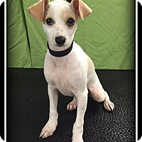 Adopt A Pet :: Ollie - Indian Trail, NC
