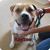 Adopt A Pet :: Kayzee - Lemoore, CA