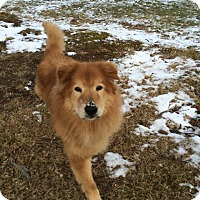 Adopt A Pet :: Rougee - Youngstown, OH