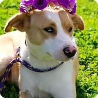 Adopt A Pet :: Tesses - Choudrant, LA