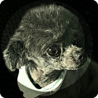Adopt A Pet :: Gilda - McKinney, TX