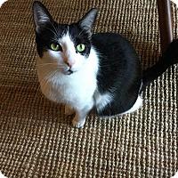 Adopt A Pet :: Scarlett - Rocklin, CA