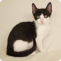 Adopt A Pet :: Rudy - Jackson, MS