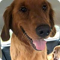 Adopt A Pet :: Hope - Cheshire, CT