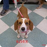 Adopt A Pet :: RIVER - Ventnor City, NJ